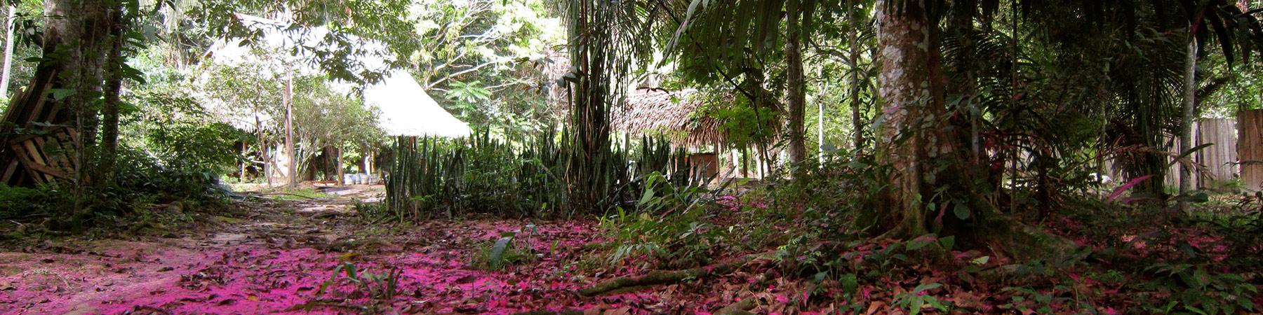 ABOUT US - Ayahuasca Retreat in Peru at the Nimea Kaya